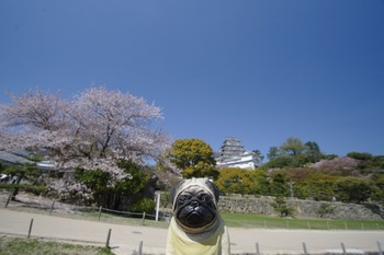 くんぺいと姫路城4