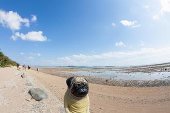 マンタの浜