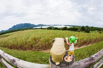 川平湾とサトウキビ畑