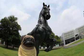 馬とくんぺい君