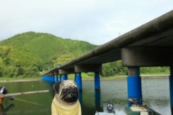 佐田沈下橋とくんぺい2