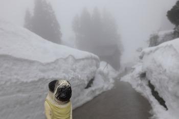 くんぺいと豪雪