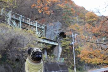 樽沢トンネルとくんぺい