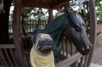くんぺい君と神馬