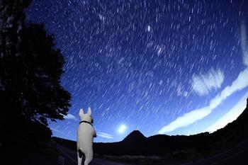 星空とブルテリア