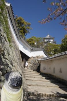 姫路城とくんぺい5