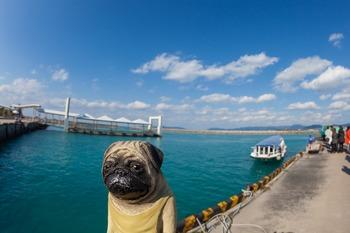 竹富港とグラスボート