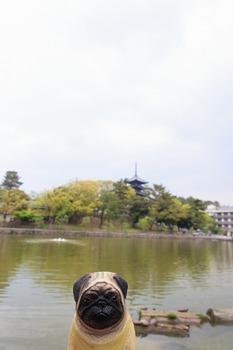 猿沢池とくんぺい
