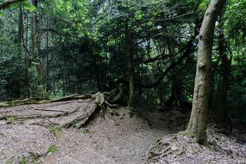 木の根の道2