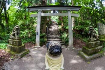 十和田神社鳥居前