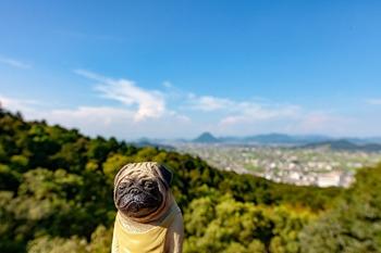 金刀比羅宮高台からの眺め